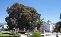 Arbol-del-Tule-Oaxaca-Mexico