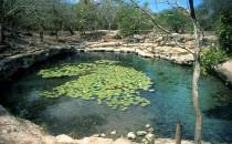 Cenote in Dzibilchaltún bei Mérida, Mexico