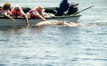 Walbeobachtung - Laguna San Ignacio, BCS