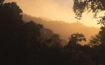 Abendstimmung im Nebelwald