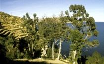 Blick über den Titicacasee, Bolivien