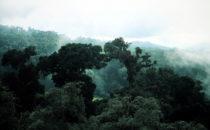 Nebelwald am Mirador de Quetzales