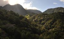 Nebelwald, Mount Totumas, © Mount Totumas, Panama