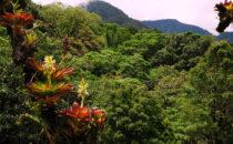 Bromelien © Mount Totumas, Panama