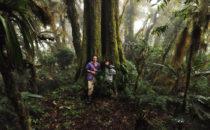 Eiche © Mount Totumas, Panama