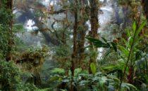 Nebelwald, © Mount Totumas, Panama