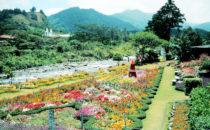 Blumenmesse in Boquete, Panama
