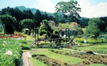 Mi jardín es su jardín, Boquete, Panama