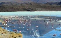 Laguna Hedionda, Bolivien © Bertram Roth