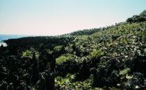 Roatán - Panorama, Honduras