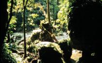 Pico Bonito Nationalpark, Honduras