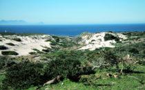 Dünen, Kap-Halbinsel, Südafrika