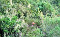 Robberg Nature Reserve, Südafrika