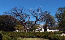 Santa Marta - Quinta de San Pedro Alejandrino, Kolumbien