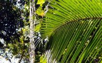 Tayrona Nationalpark - Vegetation