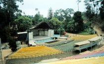 Amphitheater Quinta Vergara in Viña del Mar, Chile