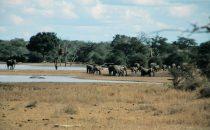 Elefantenherde im Kruger-Park, Südafrika