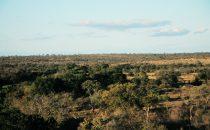 typische Landschaft des Kruger-Parks, Südafrika