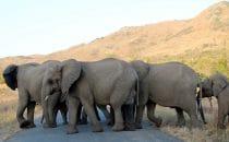 Hluhluwe-Imfolozi - Elefanten, Südafrika
