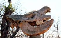 Nashornschädel, Swaziland