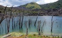 Reserva Nacional Nalcas, Chile, © Bertram Roth