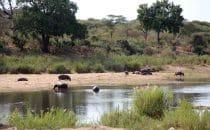 Flusspferde Kruger Park, Südafrika