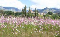 Mehloding Trail – Wildblumenwiese