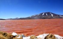 Laguna Colorada, Altiplano, Bolivien