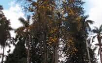 Popayán, Parque Caldas