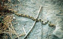 Schlange bei einer Wanderung am Atitlánsee, Guatemala