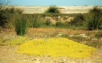 Uniab Delta, Namibia