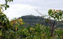 Blick über den Regenwald des Petén, © Manfred Sommer