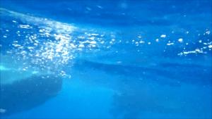 Schnorcheln mit Walhaien © Celia Brandt