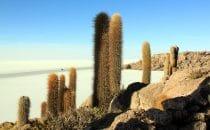 Isla Inkawasi, Salar de Uyuni, Bolivien