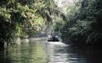 Tortuguero Nationalpark, gemeinfrei