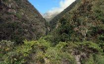 Chorotrail, Bolivien © Bertram Roth