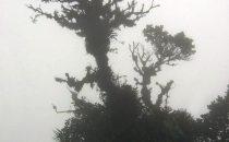 Nebelwald im Amistad Nationalpark, Panama