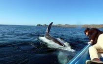 Walbeobachtung, Bahía Magdalena, Puerto San Carlos, Baja California, Mexiko