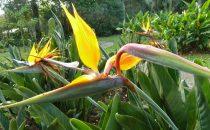 im botanischen Garten Lankaster, Costa Rica