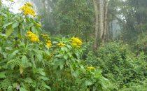 Nebelwald, Tapanti Nationalpark, Costa Rica