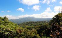 Santa Elena Schutzgebiet, Puntarenas, Costa Rica