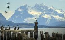 Kormorane, Puerto Natales, Patagonien, Chile