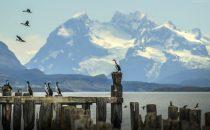 cormorants, Puerto Natales, Patagonia, Chile