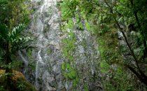 La Tigra Nationalpark bei Tegucigalpa, Honduras