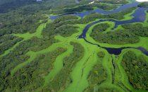 Anavilhanas Nationalpark, Amazonas, Brasilien