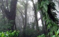 Nebelwald am Vulkan Maderas, Isla Ometepe, Nicaragua