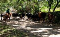 ländliches Leben auf Ometepe, Nicaragua