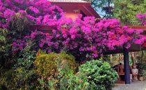 Boquete Garden Inn, Boquete, Panama