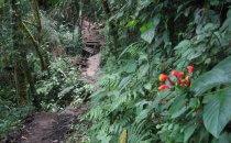 Sendero los Quetzales, Provinz Chiriquí, Panama