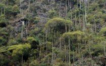 typical vegetation, Sierra Gorda, Mexico